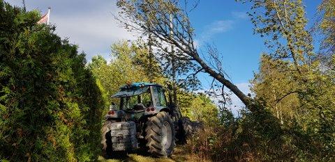 Dette treet forårsaket at mange er uten strøm på Nykirke fredag kveld.