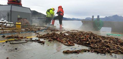 Mannskapet på arbeidsbåten Hydra rensker av all biomasse før tauverk og øvrig avfall blir sortert og levert til gjenvinning.