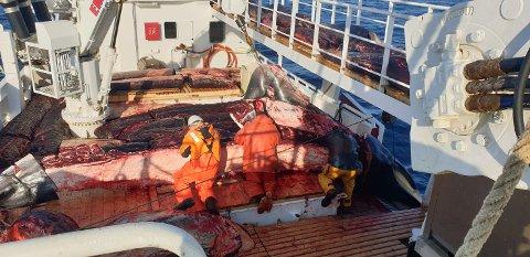 Det har blitt mye hval på båten «Reinebuen».