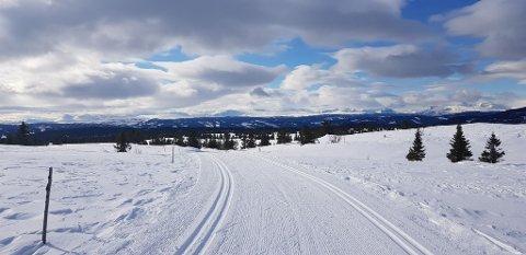 NYKJØRT: På Skardåsen i Nord-Aurdal var det flotte, nykjørte løyper torsdag. Flere andre skiområder kan nå by på skispor for lokalbefolkningen. Foto: Ingvar Skattebu