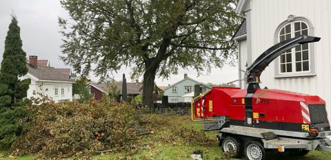 NYFRISERT: Det store treet bak kapellet på Kirkehaugen fikk en etterlengtet ansiktsløftning.