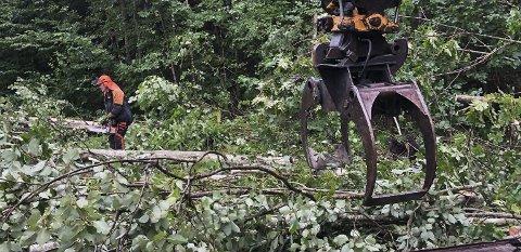 MÅTTE RYDDE: Her er mannskaper fra kommunen i gang med å rydde opp i trærne som ble røsket opp av skypumpa.