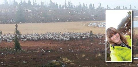 ENDELIG: Irene Stegane (49) fikk en fantastisk naturopplevelse da hun torsdag gikk tur ved Øyungen. Et tresifret antall rein dukket opp.