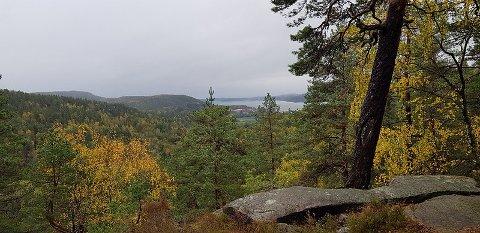 UTSIKT: Fra posten får du godt utsyn utover Sandebukta og området rundt Nordre Jarlsberg brygge.