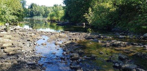 TØRKER UT: Elvene i Hagnesvassdraget fordamper og vannet forsvinner. Det gjør at livet som skulle spire i elvene dør ut.