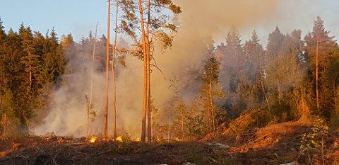 Det brenner i et hogstfelt i Båstadveien. Brannvesen og politi er på vei.