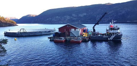 PÅ PLASS: Fredag blei postsmoltanlegget til Mowi fortøydd til lekteren i Vindsvik i Jøsenfjorden.