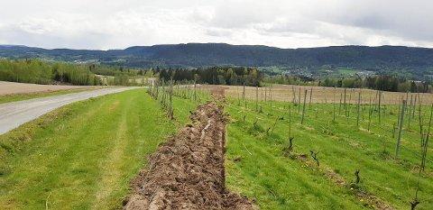 HER GIKK FERDEN: Drueranker og ståltråd lå strødd etter at traktoren kjørte gjennom vinrankene.