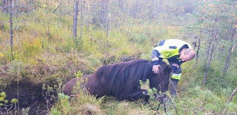 Hesten sto med myrgrunnen opp til magen da brannmennene ankom.