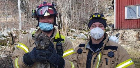REDDET: Ugla i pipa ble reddet av underbrannmester Jostein Urstad (til venstre) og brannkonstabel Jørgen Thele.