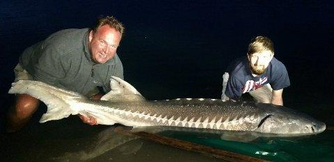 Rekord: Hallvard Pedersen fra Stavern (til høyre på bildet) fikk denne kjempestøren på kroken på fisketur i Danmark. Det er den største ferskvannsfisken som er tatt i Norden.
