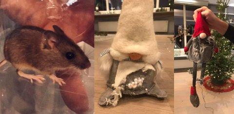Denne musa hadde slått seg ned i pappesken der Lillehammers ordfører, Ingunn Trosholmen, oppbevarte julepynt.