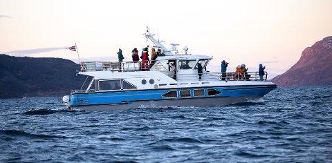 OMSTRIDT: Hvalsafaribåten «Capella» i aksjon i Nord-Troms sist lørdag. Flere vitner har fortalt om hensynsløs adferd, og at båten jaget etter hval som opererte i området.