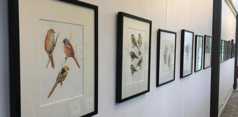 Fugler på veggen: Axel Thorenfeldt har malt fuglemotiver. De henger oppe i kunstgaten til 13. august.