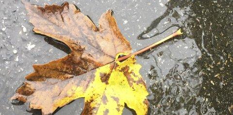 Høsten har likevel noen klare lyspunkter: Du slipper å klippe plenen.