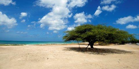 Ferieøya Aruba innfører forbud mot all engangsbruk av plast.