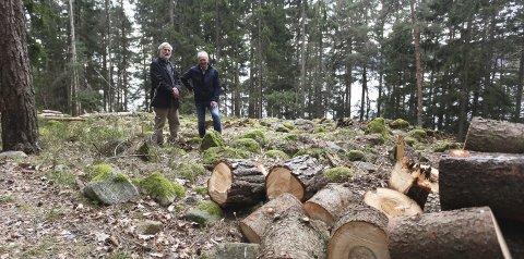 Fornminne: Arve Gleissner Gustavsen (til venstre) og Terje Karlsen fra Historielaget viser fram gravrøysa som ble ryddet på dugnad i begynnelsen av april .Foto: Lena Malnes