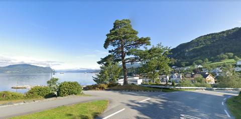 FARLEG KRYSS: Rhododendron-busken i bakken til Prestøyra har blitt større sidan bildet blei teke. Nå skal han klippast ned.