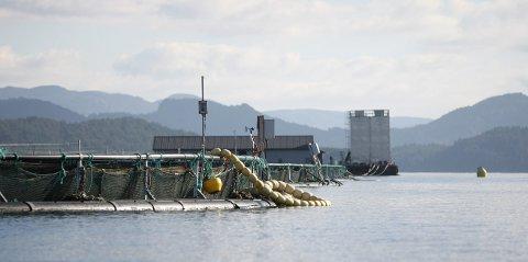 Minst 53.000 regnbueaure rømte fra oppdrettanlegget til Sjøtroll Havbruk i Sveio.