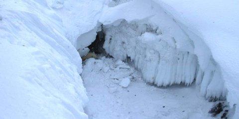 Her hadde Isbjørnen gjemt seg inne i en isformasjon. Foto: Irene Sætermoen / Sysselmannen på Svalbard