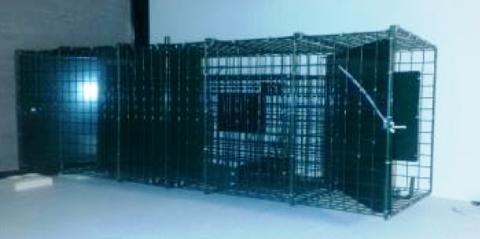 Kommunen har kjøpt inn to fangsbur til den forestående bekjempelsen av eierløse katter.