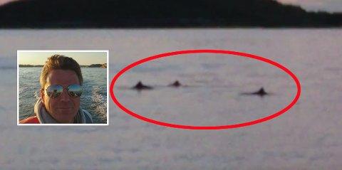 NATUROPPLEVELSE: Arne Johan Hestnes likte synet av flokken med delfiner.