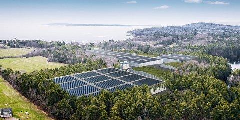 Ett av verdens største anlegg på land: Her ser vi den planlagte fabrikken i Belfast, i Maine, USA. Administrerende direktør Bernt Olav Røttingsnes har opplyst til FB at utseendet kan bli endret, men omfanget blir det samme. (Illustrasjon: Nordic Aquafarms)
