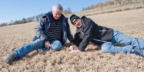 Torgeir Lima og Ragnvald Gramstad har vært bekymret for om graset har klart seg gjennom den kalde vinteren.