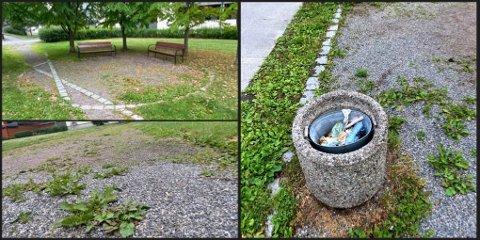 FORFALLER: Parkens sti gror igjen og blomsterurner fylles med søppel.