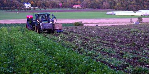 LANDBRUK: Norsk Landbrukssamvirke mener norsk matproduksjon kan stå modell for en rekke andre land. foto: espen vinje