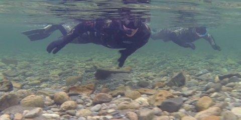 KARTLEGGER: Naturtjenester i Nord har gjennm drivtellinger, videoovervåkning, fiskefelle i elv og kilenotfiske i sjø kartleagt pukkelaks-bestanden i nordnorske elver. Bildet viser drivtelling i elv.