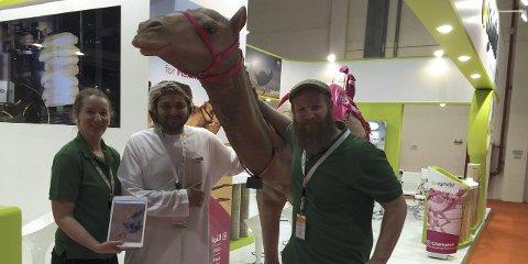 DEN FØRSTE KAMELEN: Bedriften FindMySheep fra Kvikne er på landbruksmessen Global Forum for innovations in agriculture 2015, hvor de tilbyr e-bjeller til kameleiere i Abu Dhabi. Her med iPaden som viser hvor kamelen til enhver tid er. Fra venstre daglig leder Marit Mjøen Solem, Mohammed Kvussait som jobber i det som kan sammenlignes som «Emiratenes Felleskjøpet» og Halvor Mjøen.