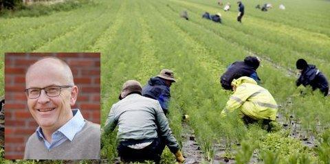 AVHENGIG: Norsk landbruk er avhengig av rimelige sesongarbeidere, sier Senterpartiets listetopp i Asker Oddvar Igland (innfelt).