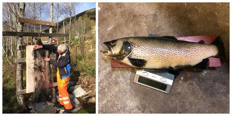 FRÅ SMÅTT TIL STORT: Nils Holen er på jakt etter småfisken for kultivera Dalavatnet. Men sist veke fekk han også ein kubbe av ein aure i garnet.