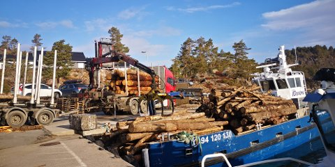 Tømmerbåt: Dypvåg, som denne lekteren til Mur- og Skjærgårdstjenester heter,  kom fullastet med tømmer til Hagefjordbrygga torsdag.