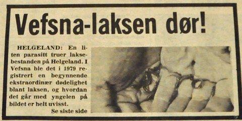 GYRO: En liten parasitt truet Vefsna-laksen i 1980. Nå vet vi mer om hvordan det gikk.