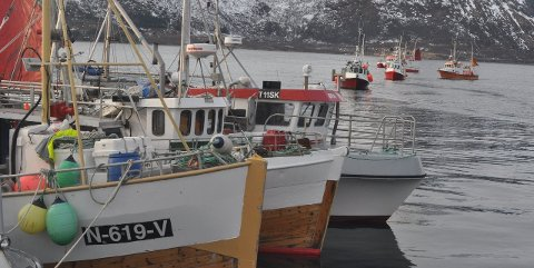 Ryggraden: Sjarkflåten under 11 meter omtales som «ryggraden» i fiskeflåten. ut fra antall. 76 prosent av båtene i Lofoten er i denne lengdegruppen. foto: magnar johansen