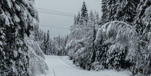 PROBLEM: Skog tett på og i blant over strømnettet skaper problem, som her i Risberget.