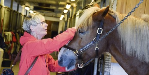 KOS OG STELL: Lise Larsen får god kontakt med kaldblodshesten Bache.