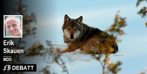 Erik Skauen: – Generelt er ikke rovdyr den største begrensningen for beitenæringen. Antall beitedyr stiger, mens tap til rovdyr synker.