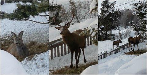 På garden i Skjåk fikk familien Bakken Plassen besøk av tre forskjellige dyr lørdag.