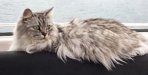 «SKIPSKATT»: Katten Lillemor fra Holmestrand er med familien på 14 dagers båttur i Sverige. – Lillemor koser seg rett og slett veldig, forteller matmor Tonhild Sælid.