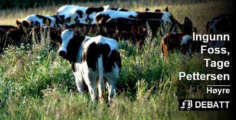 Tørken gjør at bønder og kyr ønsker seg tilbake til «den grønne eng». Regjeringen varsler tiltak for å «gjøre veien kortere». Arkivfoto
