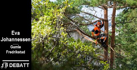 Sondre Harridsleff koser seg i jobben som trefeller på Hvaler. – Men å hogge friske trær er et dårlig valg når været blir mer ekstremt, heter det i innlegget.