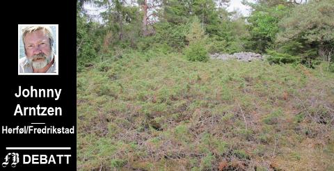 Under krattet ligger Langrøsset på Herføl, Norges største gravrøys fra bronsealderen, ifølge Wikipedia. Men ingen kan se den.