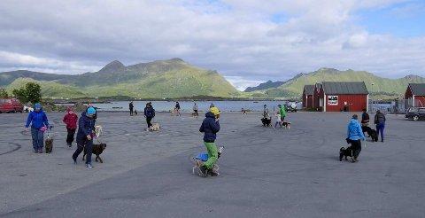 Hundetreff med Lofothund-gruppa. Bildet ble tatt før smittevernreglene ble innført.