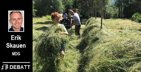 Arbeidet er i gang med slåtten. Her etableres det slåtteeng i Torsnes. Dette er tiltak som bidrar til økt naturmangfold.