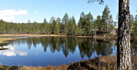 Karlstjern: En idyll i nærheten av Øksne og Kolsjø.foto: tor Dalaker Lund