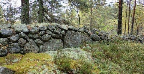 HISTORIE: Bildet viser et fragment av mange mil med gamle steingjerder. Mange er ivaretatt i utbyggingen av Kongsberg, men noe må vike. Det er kilde til debatt.
