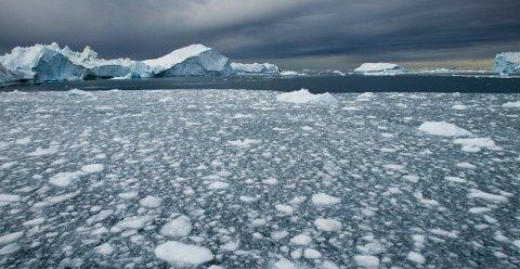 Når vannet i Arktis varmes opp til 4-6 grader celsius skjer det et skift i økosystemet der tilstanden i systemet forandrer seg. Dette kan få store konsekvenser for fordeling av arter og produksjon i havet.  Foto: Jan-Morten Bjørnbakk / Scanpix